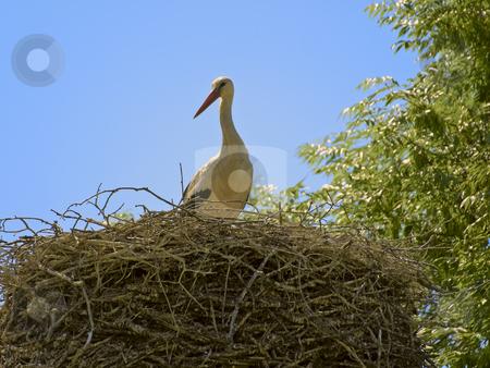 Stork stock photo, Single stork in the nest against the blue sky by Sergej Razvodovskij