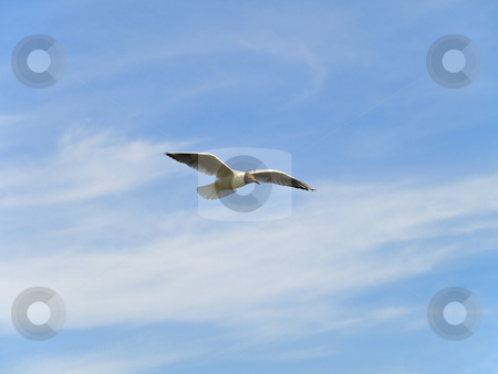 Single flying seagull  stock photo, Single flying seagul against the blue sky by Sergej Razvodovskij