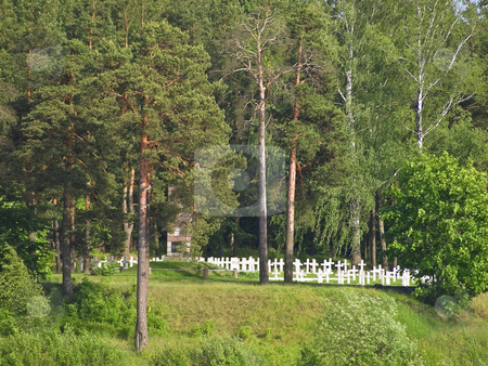 Cemetery stock photo, Cemetery crosses in sunny day by Sergej Razvodovskij