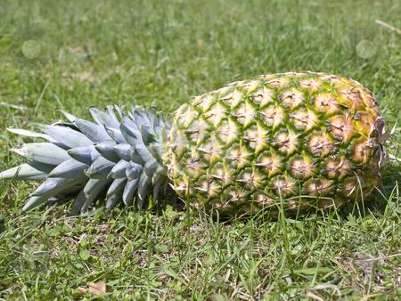 Pineapple on grass stock photo, Single big pineapple at the green grass by Sergej Razvodovskij
