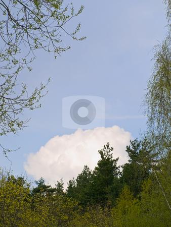 Clouds stock photo, Blue sky with big white clouds under trees spire by Sergej Razvodovskij