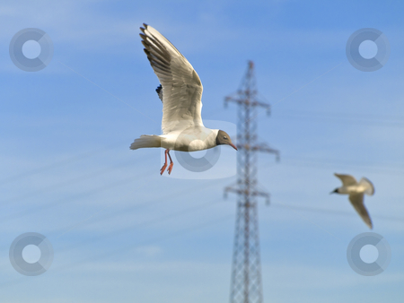 Seagulls and electricity stock photo, Two seagulls flying in blue sky against the electricity by Sergej Razvodovskij