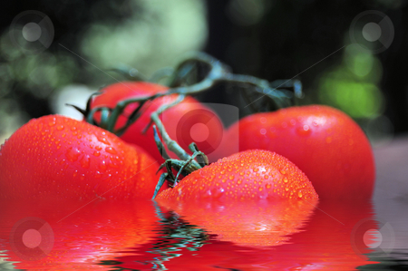 Wet Tomatoes stock photo, Vine ripened tomatoes attached to the vine reflected in water by Lynn Bendickson