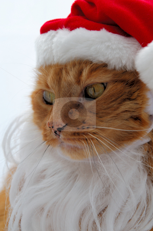Santa Cat stock photo, Orange cat on a light background with a samta claus hat and white beard by Lynn Bendickson