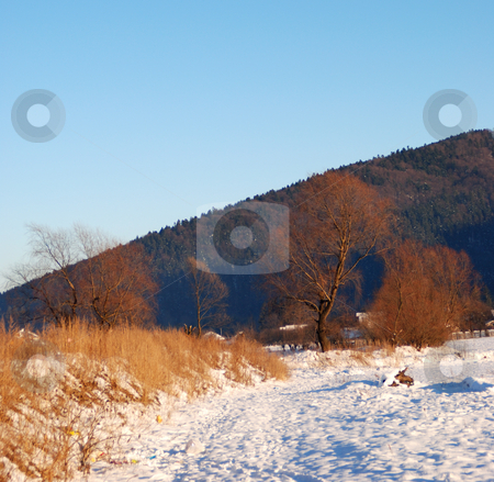 winter stock photo, Winter image with trees and snow by Dragos Iliescu