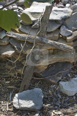 Wooden Cross With Thorns stock photo, Religious old wooden cross laying on stones with thorns and green leaves in foreground by Dennis Crumrin