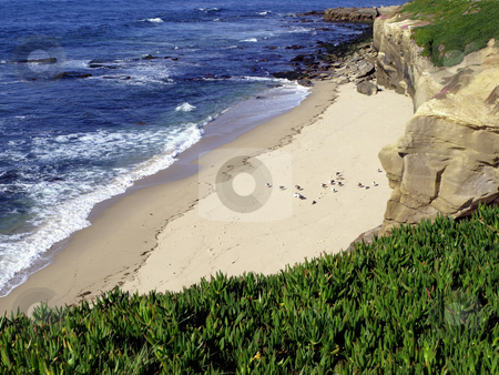 Birds on beach along Pacific ocean  stock photo, View of birds on beach along Pacific ocean from lush landscaped bluff by Jill Reid