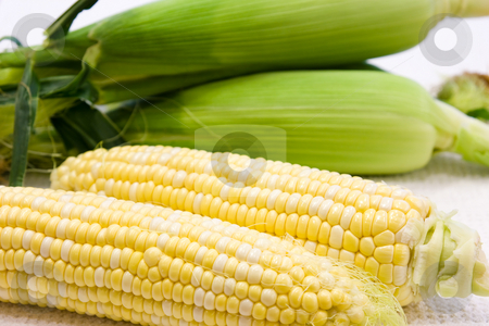 Yellow Corn stock photo, Freshly harvested yellow corn in close up view by Hieng Ling Tie