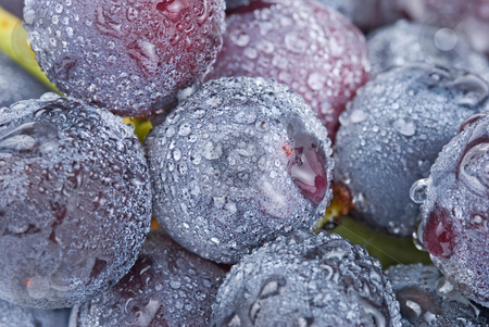 Grapes with waterdrops, fruit. stock photo, Fresh grapes with waterdrops, delicious fruit. by Lawren