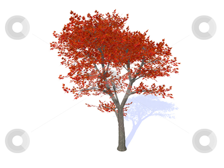 Tree stock photo, Tree with red foliage on white background - 3d illustration by J?