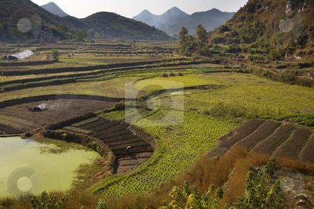 Chinese Peasant Working Fields, Guizhou, China stock photo, Chinese Peasant Working Fields, Guiyang, Guizhou, China by William Perry