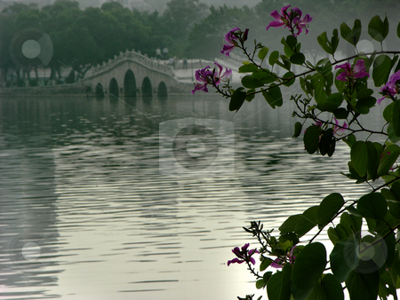 Hong Kong Orchid Tree, Chinese Bridge, Huizhou, China stock photo, Hong Kong Orchid Tree, Bauhina Blakeana in Chinese garden and bridge, Huizhou West Lake, Guangdong Province, China by William Perry
