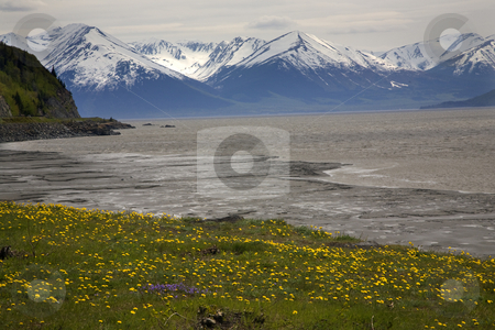 Snow Mountains Yellow Flowers Ocean Seward Highway Anchorage Ala stock photo, Snow Mountain Range ocean yellow flowers, seward highway, anchorage, Alaska by William Perry
