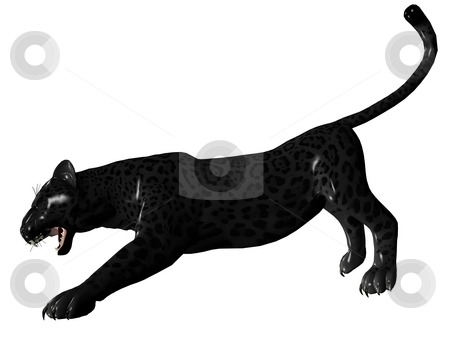 Agressive black panther stock photo, 3D rendered image of Black panther on white background an isolated by Patrik Ruzic