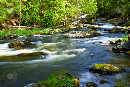 River through woods stock photo, Water rushing among rocks in river rapids in Ontario Canada by Elena Elisseeva