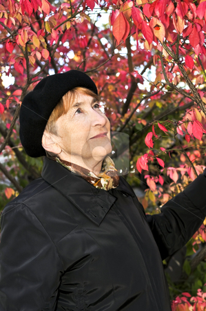 Senior woman in fall park stock photo, Senior woman looking up in fall park by Elena Elisseeva