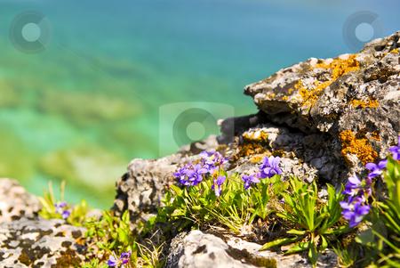 Wildflowers at shore of Georgian Bay stock photo, Wildflowers and rocks at shore of Georgian Bay Ontario Canada by Elena Elisseeva