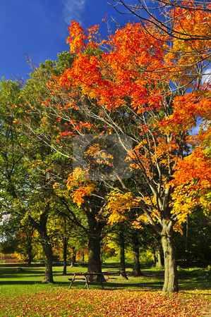 Autumn trees stock photo, Group of colorful trees in autumn park by Elena Elisseeva