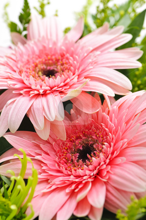 Flower arrangement stock photo, Close up of floral arrangement with pink gerberas by Elena Elisseeva