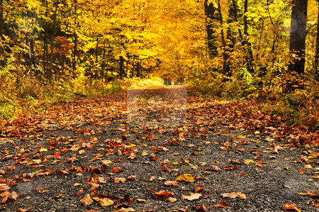 Autumn path stock photo, Trail through group of colorful trees in autumn park by Elena Elisseeva