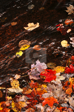 Autumn leaves in creek stock photo, Small brook in fall forest with colorful leaves by Elena Elisseeva