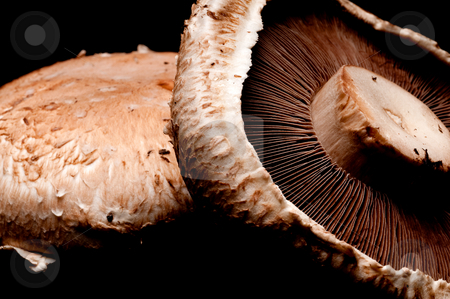 Horizontal macro of portabella mushroom caps on black stock photo, Horizontal macro of portabella mushroom caps on black by Vince Clements