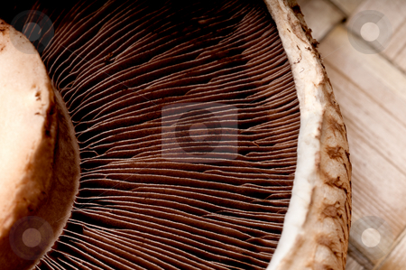 Macro of portabella mushroom caps on a brown textued background stock photo, Macro of portabella mushroom caps on a brown textued background by Vince Clements