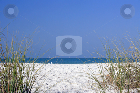 Beach. stock photo, Photography of the one beach in the Florida where highlight in first plane the vegetacion tipica of the place. by Carlos Melillo