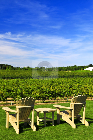 Chairs overlooking vineyard stock photo, Muskoka chairs and table near vineyard under blue sky by Elena Elisseeva