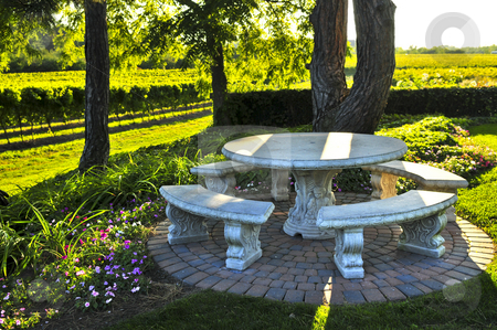 Benches overlooking vineyard stock photo, Benches and table near vineyard at winery by Elena Elisseeva