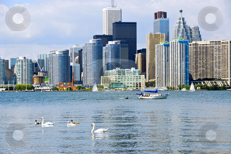 Toronto skyline stock photo, Toronto harbor skyline with skyscrapers sailboat and swans by Elena Elisseeva