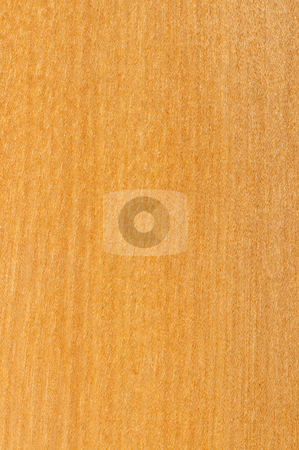 Pre-finished hardwood floor sample stock photo, Close up of prefinished hardwood flooring sample by Elena Elisseeva