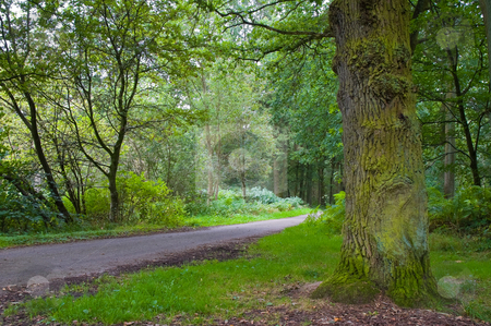 Fresh green forest stock photo, Fresh green forest with path running trough by Karin Claus
