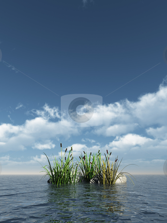 Reed stock photo, Reed and stones at the ocean - 3d illustration by J?