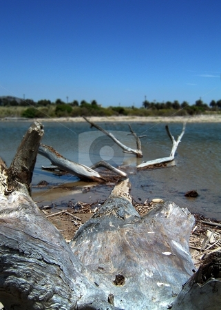 Driftwood stock photo, Close up of driftwood near the cost with blue sky. by Henrik Lehnerer