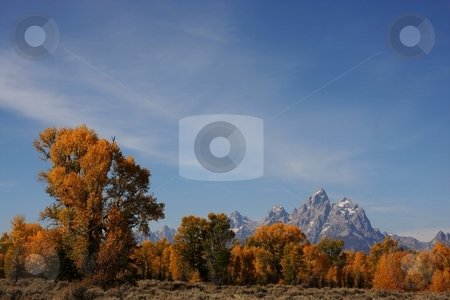 Grand Teton National Park stock photo, Grand Teton National Park Showing fall Colors by Mark Smith