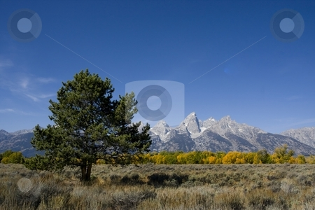 Grand Teton National Park stock photo, Grand teton National Park  in the fall showing autumn colors by Mark Smith