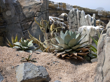 Desert Landscape stock photo, This photo shows a desert landscape with sand, cactus plants, rocks and aloes. by Valerie Garner