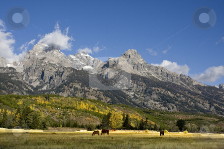 Grand Teton National Park stock photo, Grand Teton National Park with Horses in the forground by Mark Smith