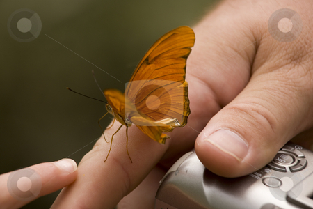 Butterfly Hand Camera stock photo, Little Visitor Butterfly on Hand with Camera.  Male Butterflies like skin because they are looking for salt, which they need to reproduce. by William Perry