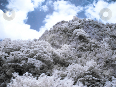 Infrared forest stock photo, Infrared picture of a beautiful forest in the mountains with fuzzy clouds by Laurent Dambies