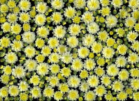 Spring Blossoms stock photo, Arrangement of many vibrant yellow blooming spring flowers by Christian Slanec