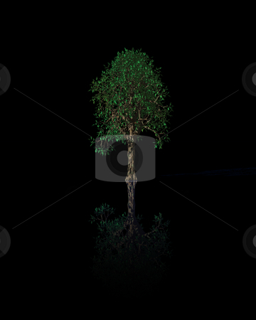 Tree stock photo, Tree on black background - 3d illustration by J?