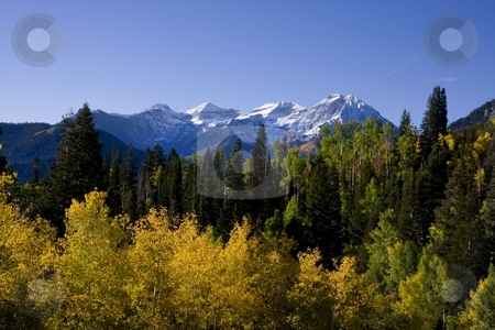 Autumn SPlender stock photo, Fall colors on a high mountain meadow with blue sky and clouds by Mark Smith