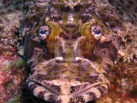 Crocodile Fish stock photo,  by Ryan Dandy