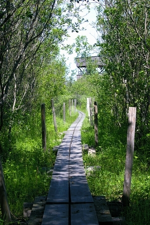 Wooden pathway stock photo,  by Turo Jantunen
