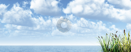 Reed stock photo, Reed at water and cloudy sky - 3d illustration banner by J?
