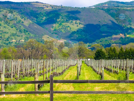 California vineyard stock photo, Vineyard in Sonoma California by Jaime Pharr