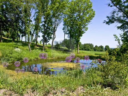 Water pond stock photo, Scenic water pond in the beautiful sunny nature by Sergej Razvodovskij