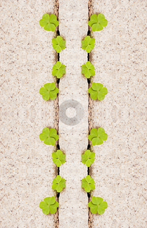 Creeping oxalis in granite stock photo, Creeping oxalis in granite as Parrapal lines by Lawren